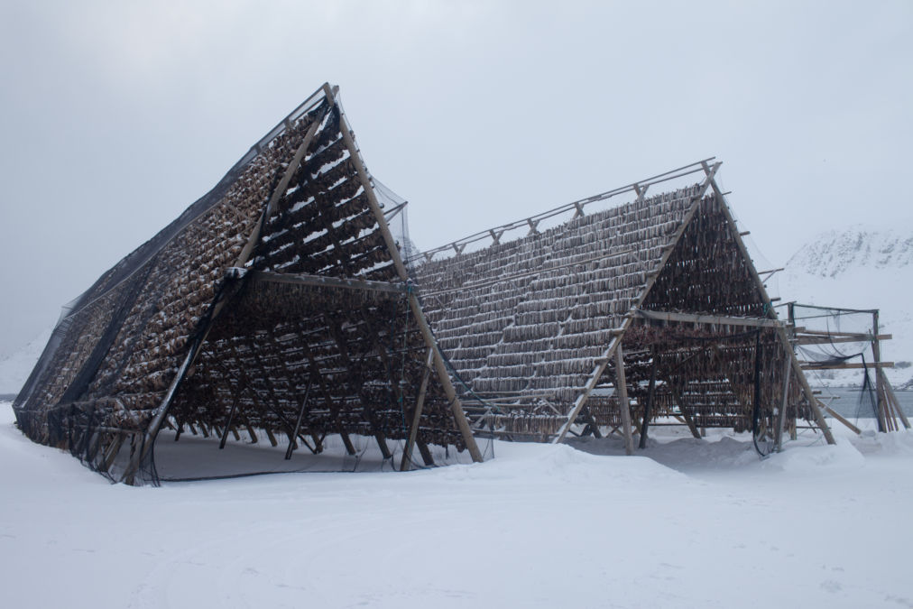 Stockfish Drying Houses, Hammerfest, Norway.